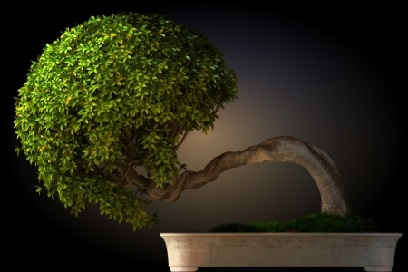 A gorgeous asymmetrical bonsai tree